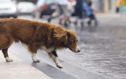 Agora é lei em SP: se atropelar animal, motorista terá que socorrê-lo