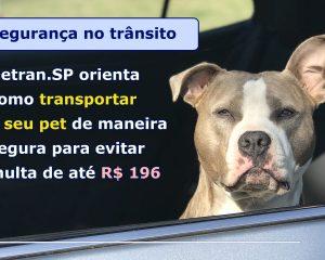 DETRAN.SP ORIENTA COMO TRANSPORTAR O SEU PET DE MANEIRA SEGURA PARA EVITAR MULTA DE ATÉ R$ 196